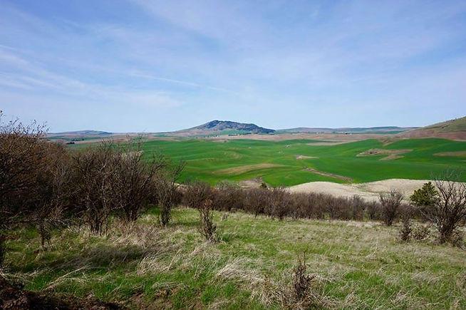 Kamiak Butte and the greening hills