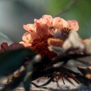 Taller de flores por Ana de Simply Flowers Shop