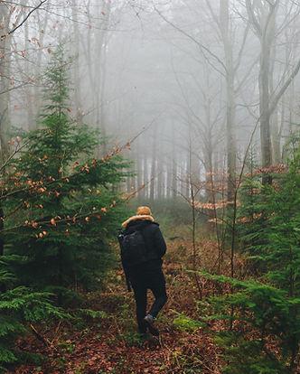 rewire-your-mind-forest.jpg