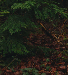 rewire-your-mind-forest-2_edited.jpg