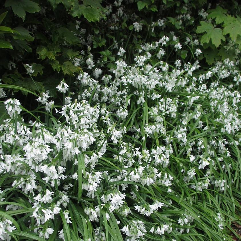 Foraging walk - Hackney Marshes