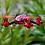 Thumbnail: Mini Drone Caméra 6 axes 2.4 ghz