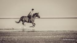 Relaxing Horse Sea Ride