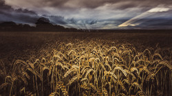 Fields of Scotland  ©NGS-MBS