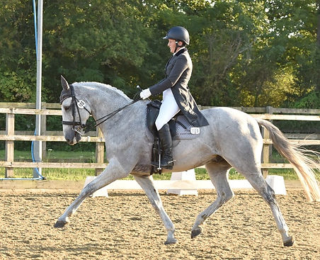 Alison & Denver thanks to Out & About Dressage, Celia Cadwalladerr