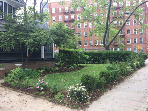 Ditmas Park front garden before