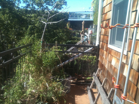 Red Hook terrace garden before