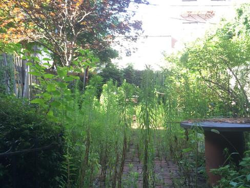 Carroll Gardens backyard before weeding
