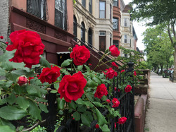 brooklyn rose garden