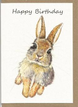 BWW6   Rabbit