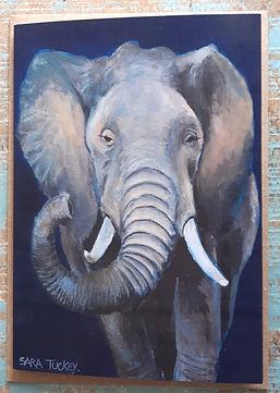 SF 8 ELEPHANT