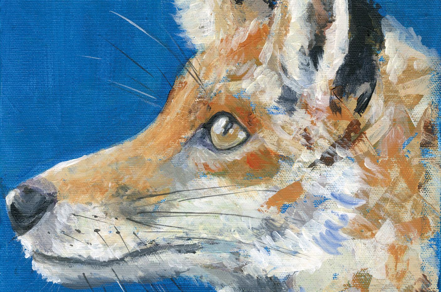 Mr. Fox  No. 8