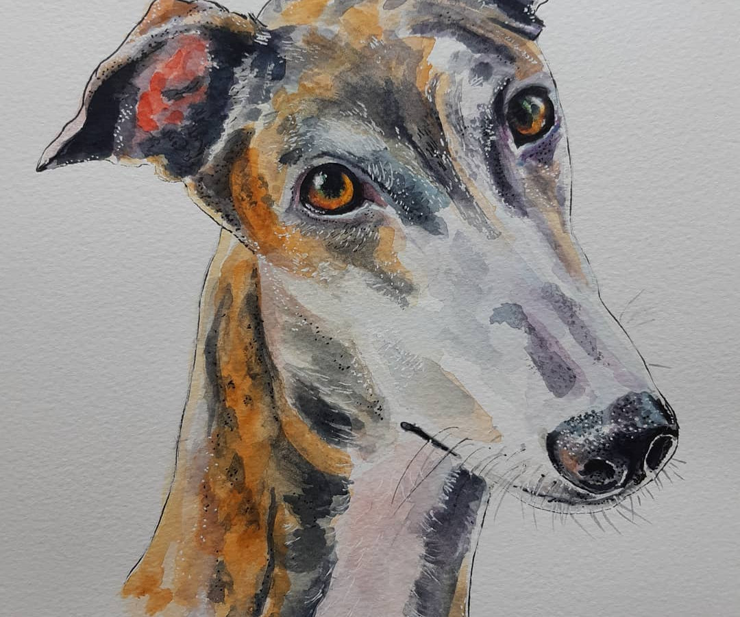 Graceful Greyhound.