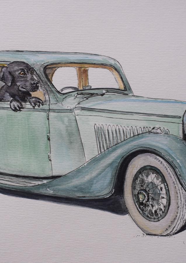 Black Lab in a Bentley.