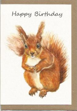 BWW10 Squirrel