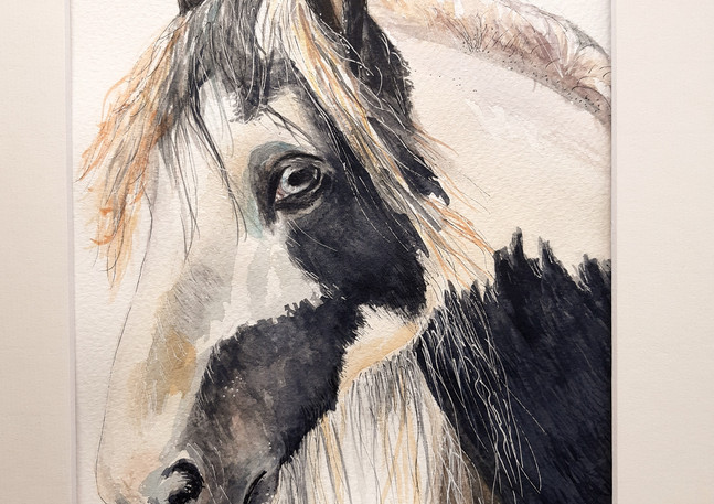 Cob Pony