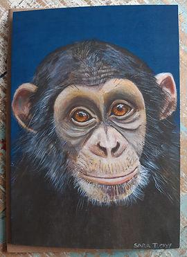 Chimpanzee greetings card