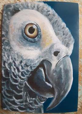African Grey Parrot greetings card