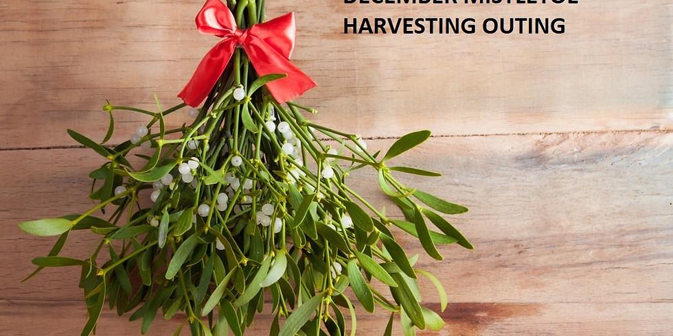 Mistletoe Harvesting - No Camping   Church Arrival 8 AM - 8:30 AM Departure
