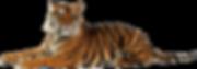 tiger_sm.png