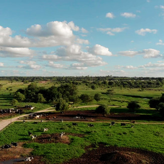 Tavistock Farm