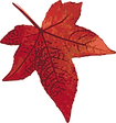 100710-red-maple-leaf-300px.png