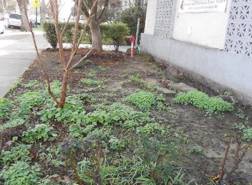 A Horticultural Use of Native Plants