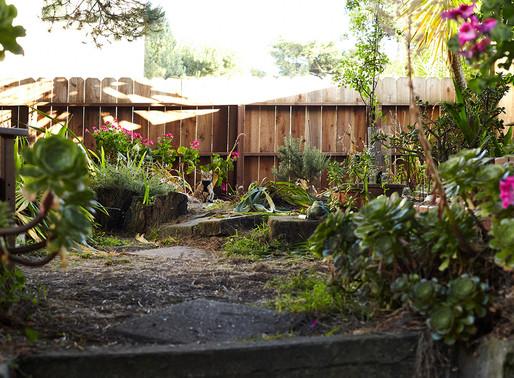 A Backyard Journey