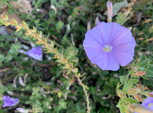 Nature in your Neighborhood with Sutro Stewards