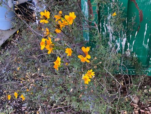 Marigolds: Problem Solvers
