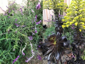 Stages of Urban Gardening: Water-wise, Habitat-supporting, and Finally, Natives