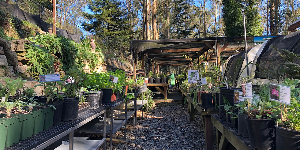 Native Plant Online Sale!