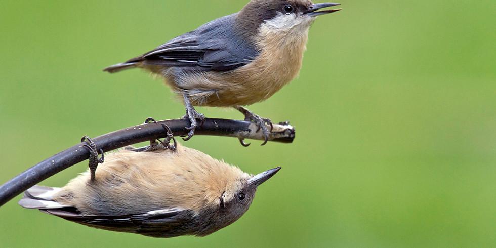 Bird Walk!