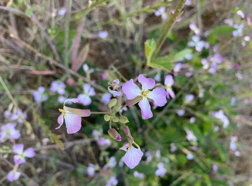 El Polin Springs Blooms
