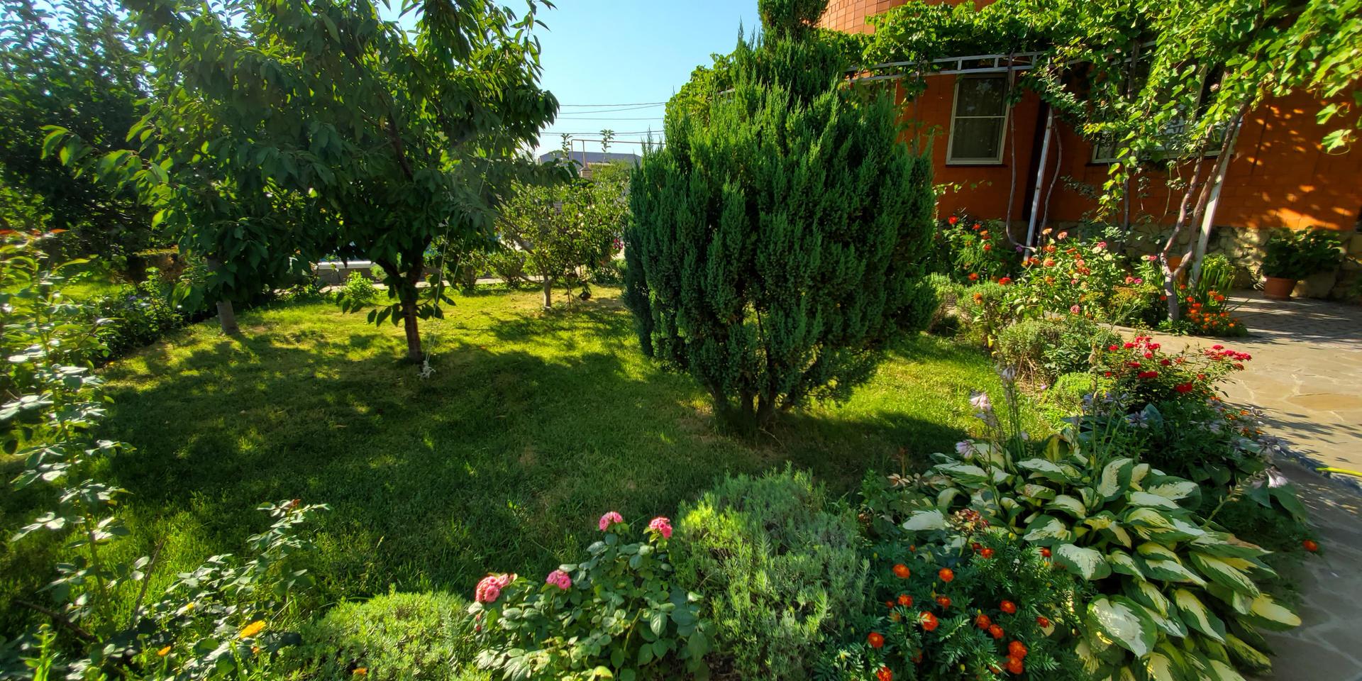 garden & pool - 20200731_165510.jpg