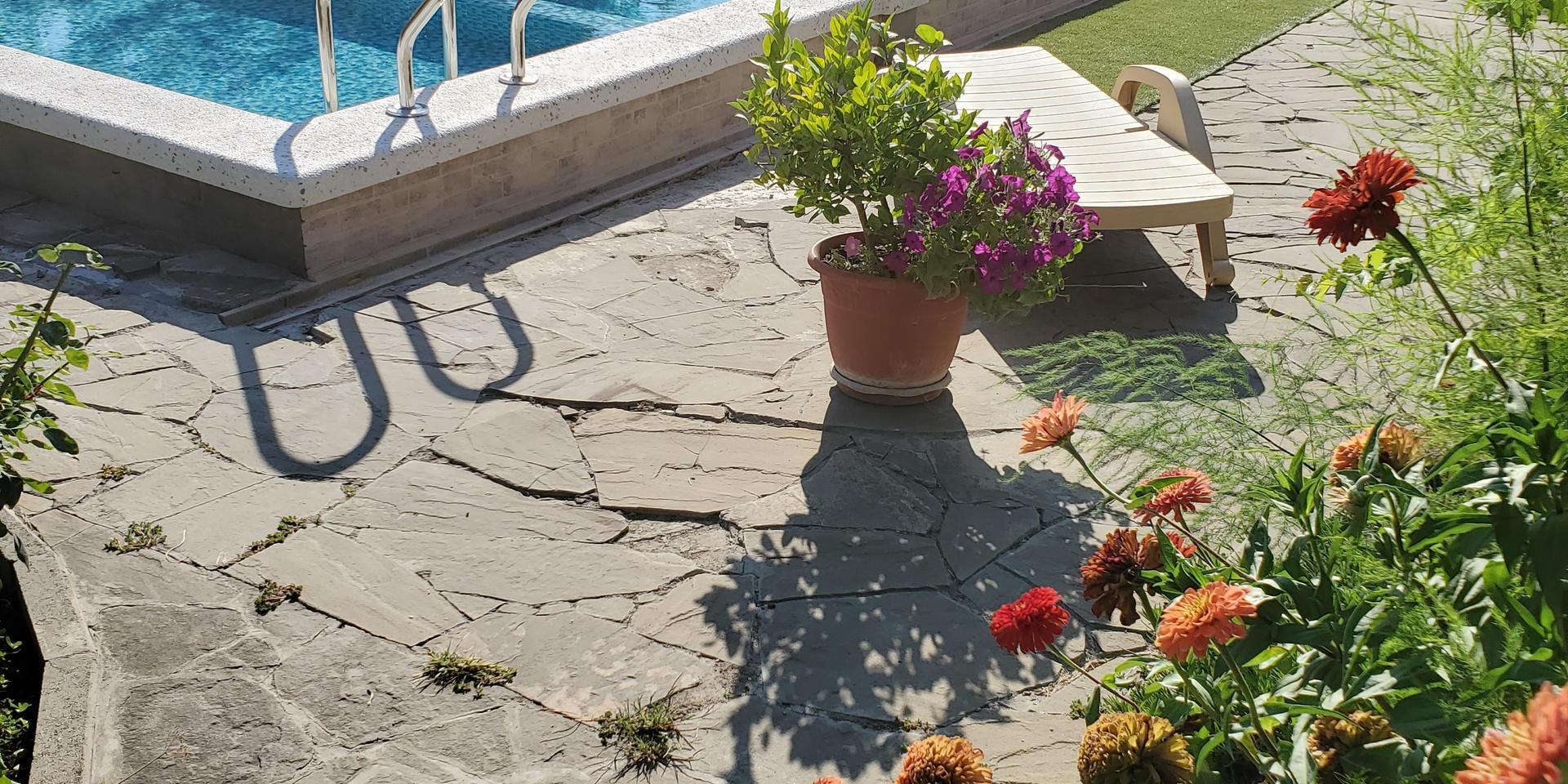 garden & pool - 20200731_165203.jpg