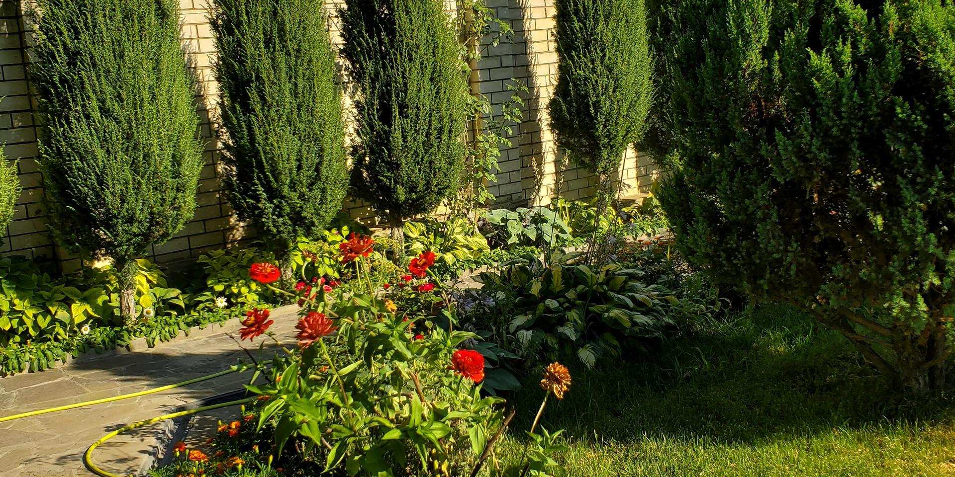 garden & pool - 20200731_165150.jpg
