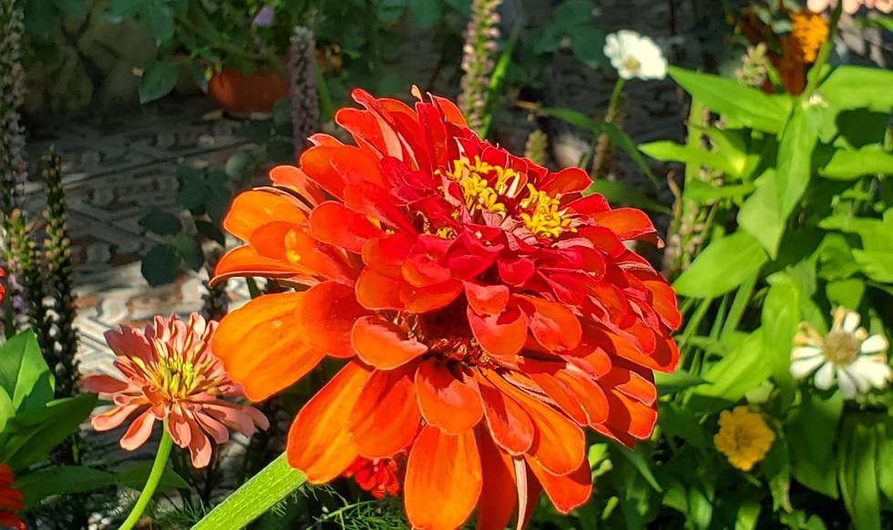 garden & pool - 20200731_165141.jpg