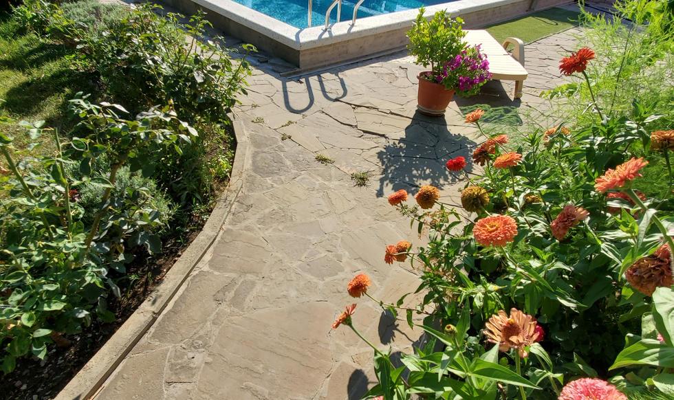 garden & pool - 20200731_165219.jpg