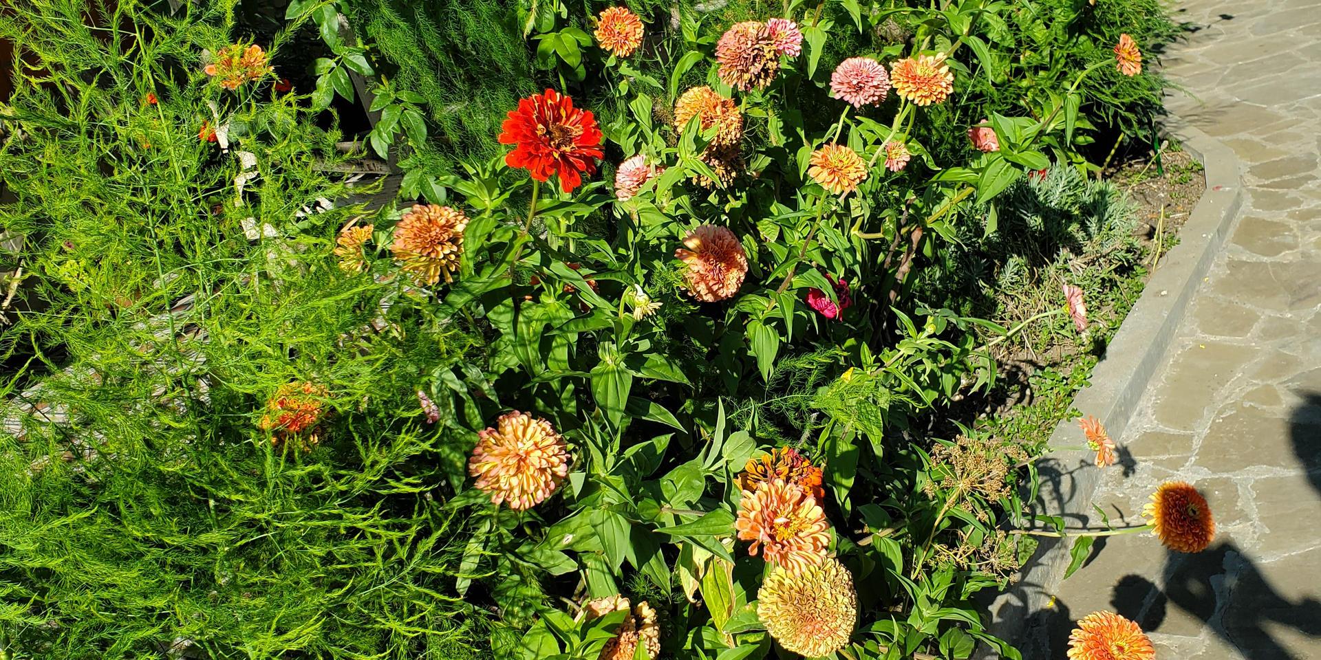 garden & pool - 20200731_165045.jpg