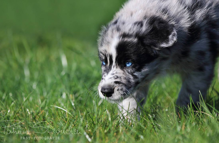 JAX pup 1