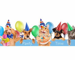 Having a Pawty?