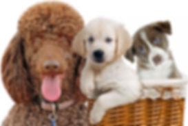 Puppys Choice w Remy.jpg