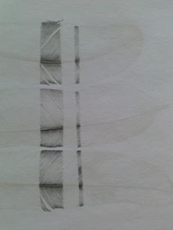 feathers/heiroglyph 1