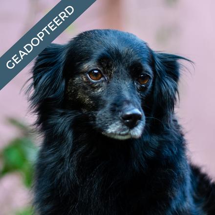 Chicca - GEADOPTEERD