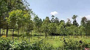 Abukutsa Arts Academy - the land