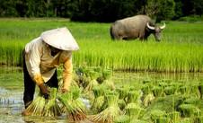 Farmer-with-buffalo.jpg