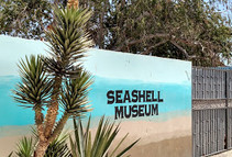 Seashell Museum.jpg