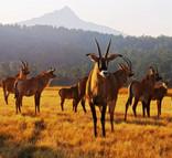 Mlilwane Wildlife Sanctuary.jpg