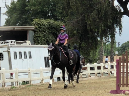 Lesson #4: We are always learning! What 2020 has taught me so far, in equine terms.